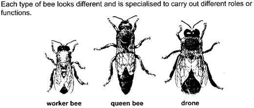 The Kinds Of Bees In A Colony